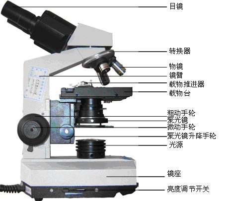 正置生物显微镜是我们在实验室和教室中最常见的